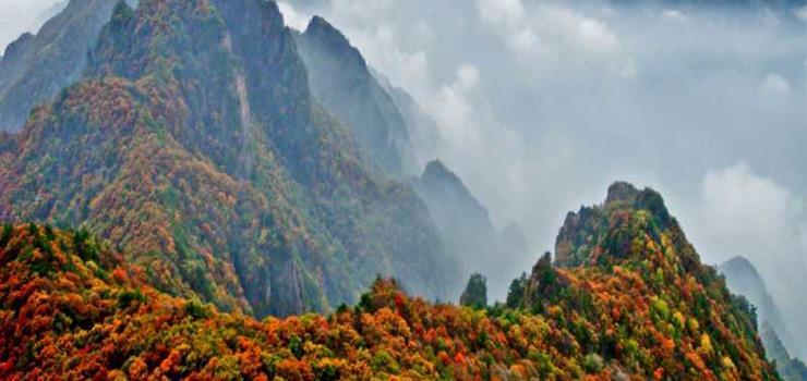沁水历山荒野森林公园