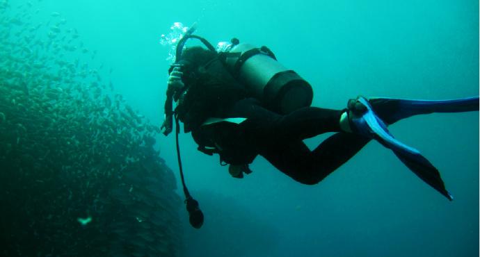 在劳劳海滩可以看见成千上万的小动物,比如成队的隆头鱼,蝴蝶鱼,刺尾