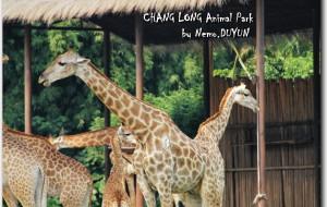 广州娱乐-广州长隆野生动物世界