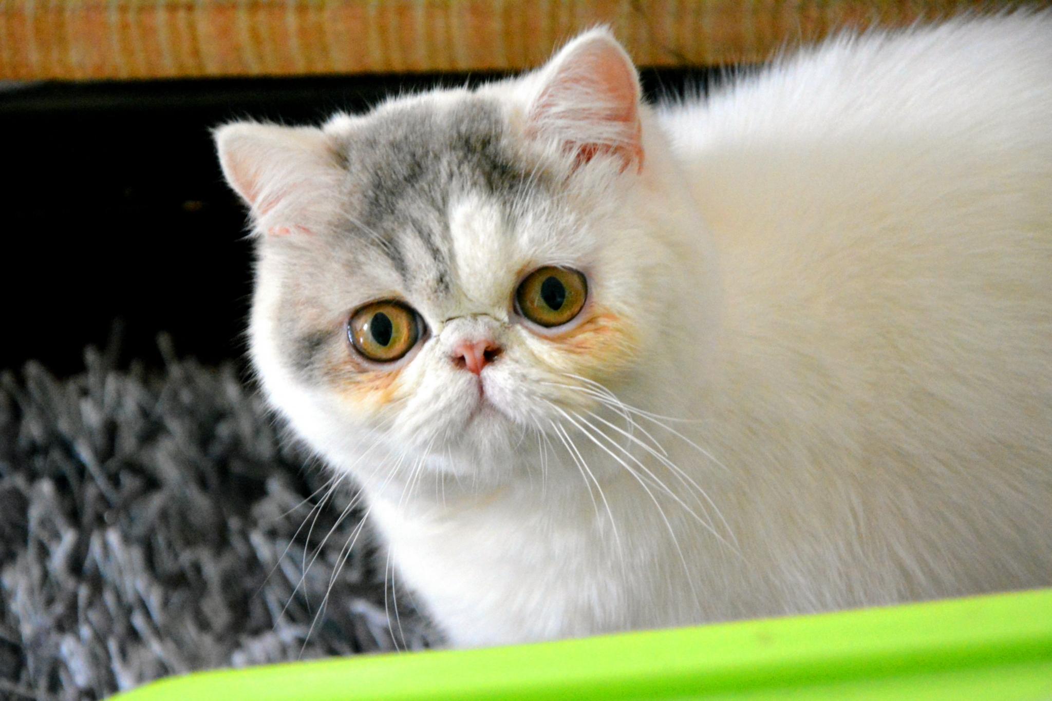 """别人家的加菲猫--""""标准照"""""""