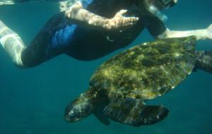 【加拉帕戈斯群岛图片】Galapagos加拉帕戈斯之浮潜