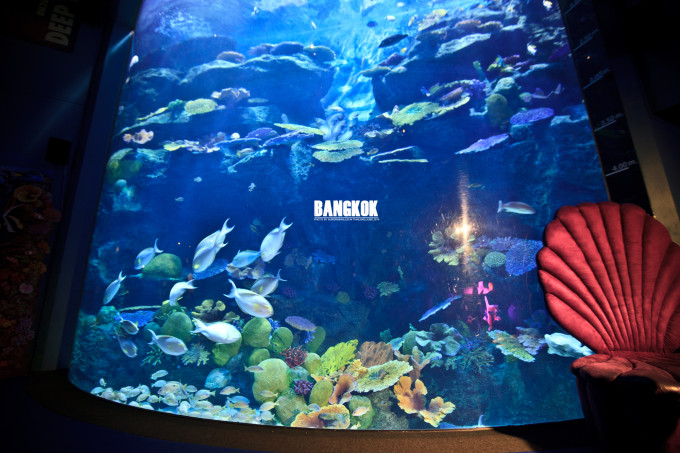 动物类 适合亲子类型:喜爱小动物的孩子和家长们 暹罗海底世界 关键