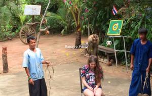 苏梅岛娱乐-猴子剧场