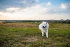 【带猫狗自驾】夏至末的季节,草原天路之行 —— 豆皮的头一次出行