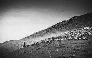 【禾木图片】天山飘翠羽,北疆走黄衫——北疆金秋行摄记