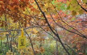 【本溪图片】老边沟的枫叶,红遍山野
