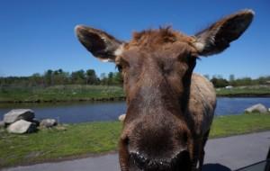 【蒙特利尔图片】#消夏计划#Parc Safari-蒙特利尔野生动物园