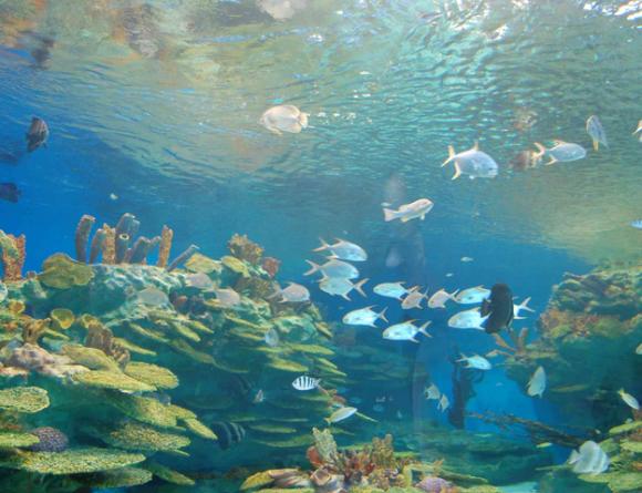 8万平方米,拥有热带雨林,海龟岛,鲨鱼湾,海底隧道,精品馆,极地馆,4d