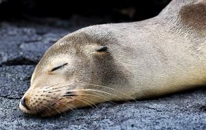【加拉帕戈斯群岛图片】物种起源——加拉帕戈斯群岛