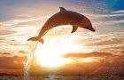 毛里求斯蓝湾浮潜+快艇追海豚一日游(自然桥/天涯海角+明星中文导游团队+浮潜胜地+专线专供)