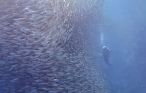 【宿雾图片】菲律宾端午行---墨宝、Nalusuan【休闲&潜水】