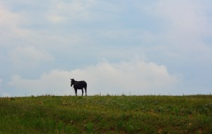 【草原天路图片】细雨中行驶在草原天路
