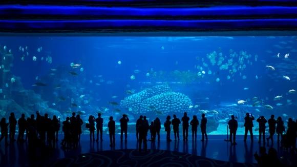 珠海长隆海洋王国,奇幻大冒险 建议游玩路线:海豚湾→5D城堡影院→雨林飞翔→横琴海→海洋奇观→极地探险  精彩的海洋大冒险从这里开始啦!进入深海世界,率先映入眼睛的是一幅巨型LED天幕,让您恍若置身璀璨华丽的海底宫殿。光折射在水里透出好看的光芒,巨型魔鬼鱼从您头顶呼啸飞过,色彩斑斓的小鱼成群结队穿梭其中。大街雨旁的立体珊瑚和礁石场景五彩缤纷,尽情展现海底世界令人叹为观止的一面。  第一站:浪漫 • 海豚湾 游玩亮点:海豚保育中心、海豚岛 翠绿的棕