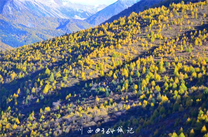 秋景和蓝天白云,美得一塌糊涂 美丽的雅拉雪山开始出现 给你一些秋天