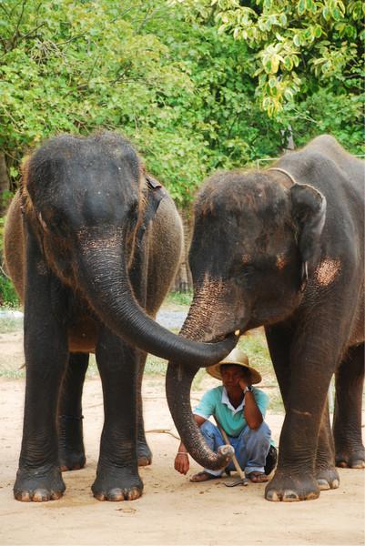 大象造型概括步骤图