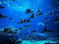 珠海横琴长隆国际海洋度假区