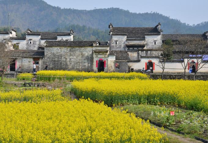 宏村写生水粉植物