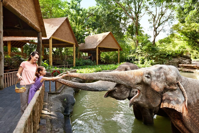 新加坡动物园,给大象亲密喂食