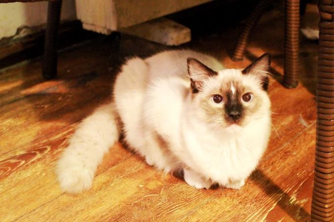壁纸 动物 狗 狗狗 猫 猫咪 小猫 桌面 680_453