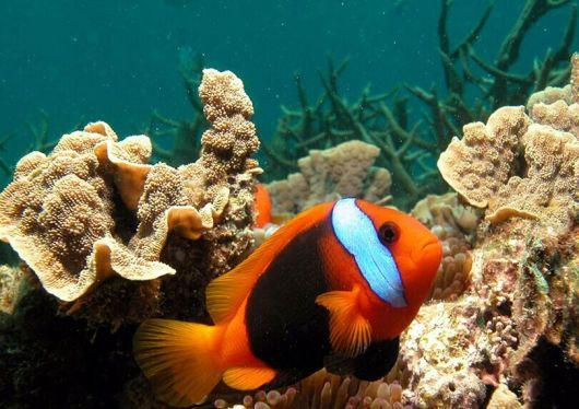 壁纸 海底 海底世界 海洋馆 水族馆 530_374