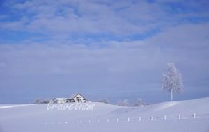 【美瑛町图片】冬之美瑛——那副无声雪景(札幌、美瑛、阿寒湖、大阪、奈良、东京)