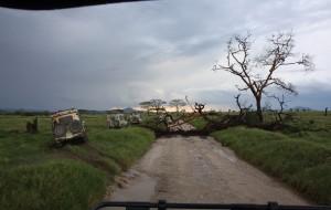【桑给巴尔岛图片】【翻转地球之东非】坦桑尼亚,简^爱启程。