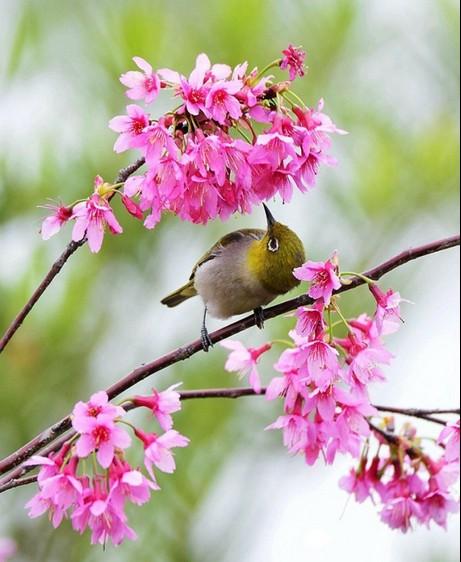 景色:春天的小鸟