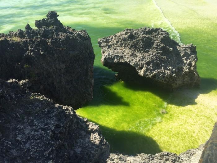 听说长滩岛每年4月初份海藻特多,那位朋友去过请告知一下,万分感谢,有
