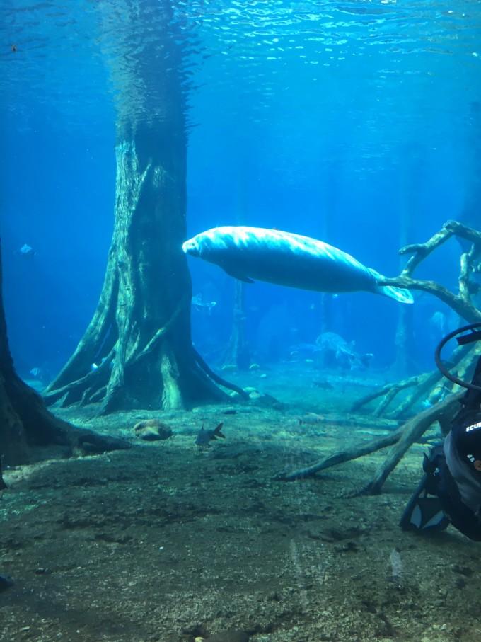 珠海海洋公园+广州长隆野生动物园+大马戏五天四晚游