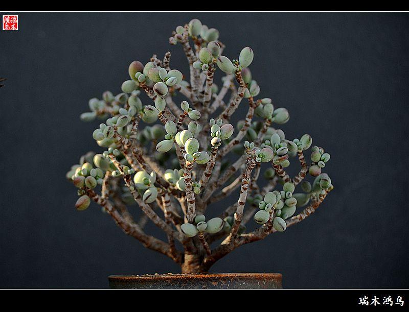 植物元素首饰设计