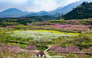 【乐昌图片】九峰万紫千红正当时  免费的民间赏花圣地
