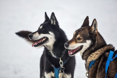 感受人与动物的完美融合,驱车前往只有狗拉雪橇和滑雪才能进入的mont