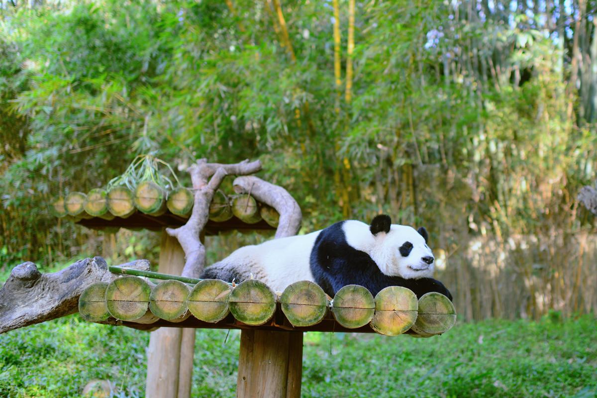 出发广州长隆旅游度假区前需要注意什么,广州长隆旅游度假区行前指南