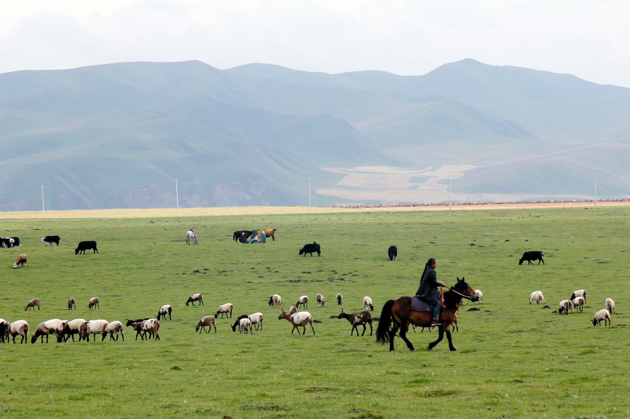 XiaHe Sangke grassland